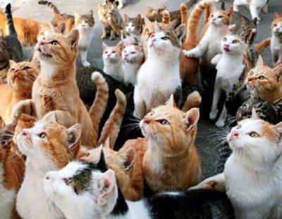 eredità colonia gatti