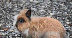 Come far vivere piu a lungo un coniglio
