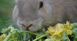 Le verdure giuste da inserire nell'alimentazione del coniglio (foto Pixabay)