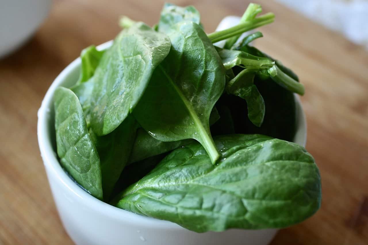 coniglio mangia tipi spinaci