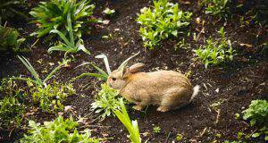 coniglio può mangiare le zucchine
