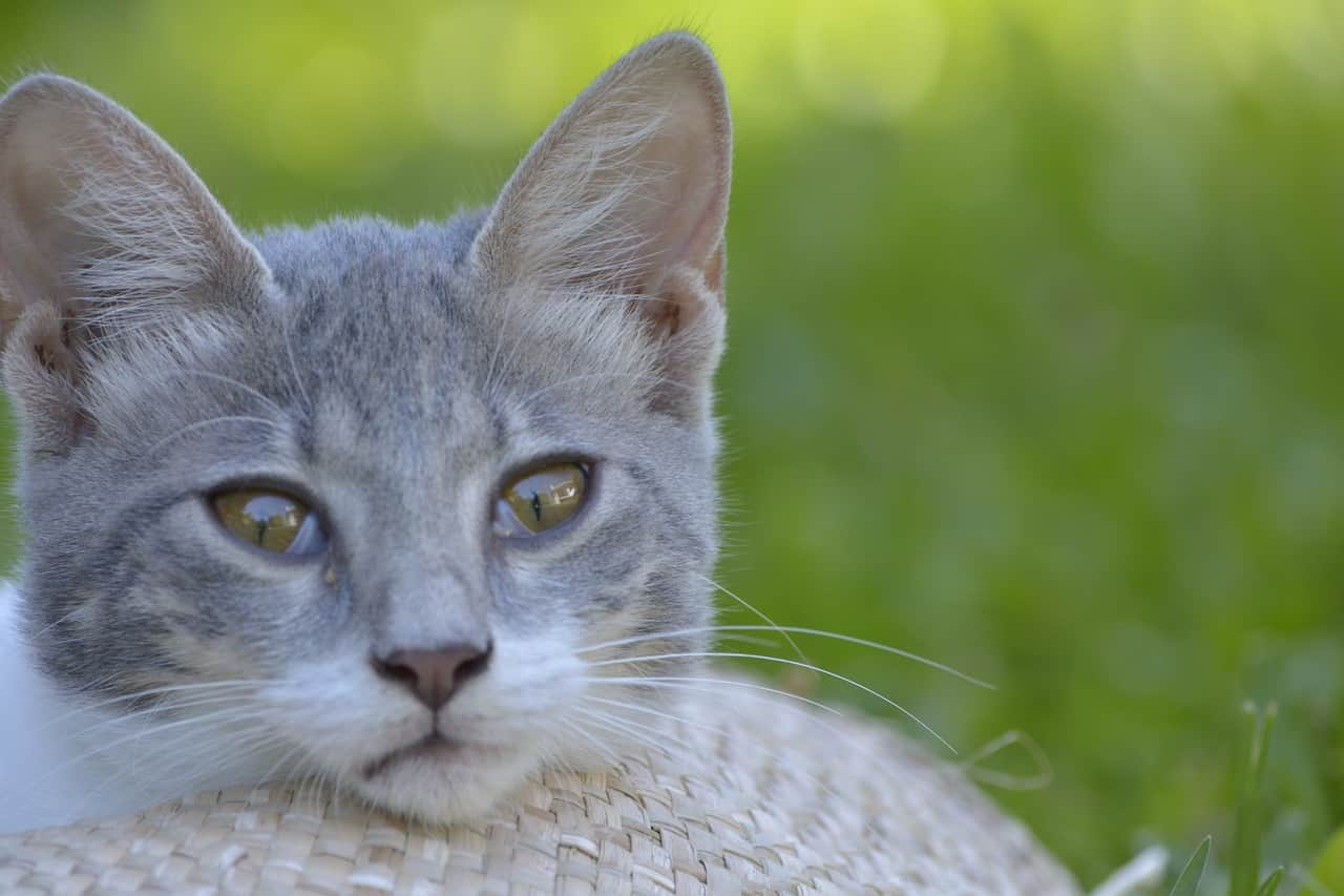 gatto maestro consapevolezza