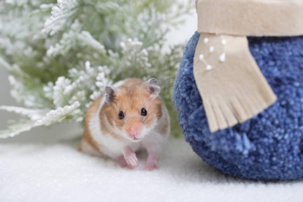 Come proteggere la gabbia del criceto dal freddo