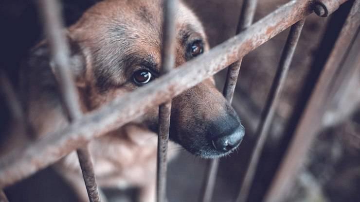 crudeltà animali reato