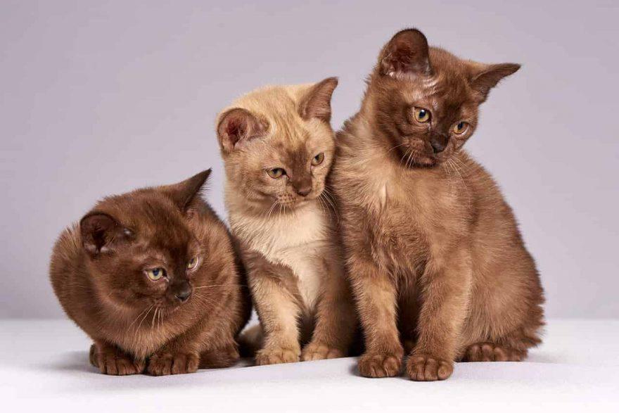 gatti socializzati