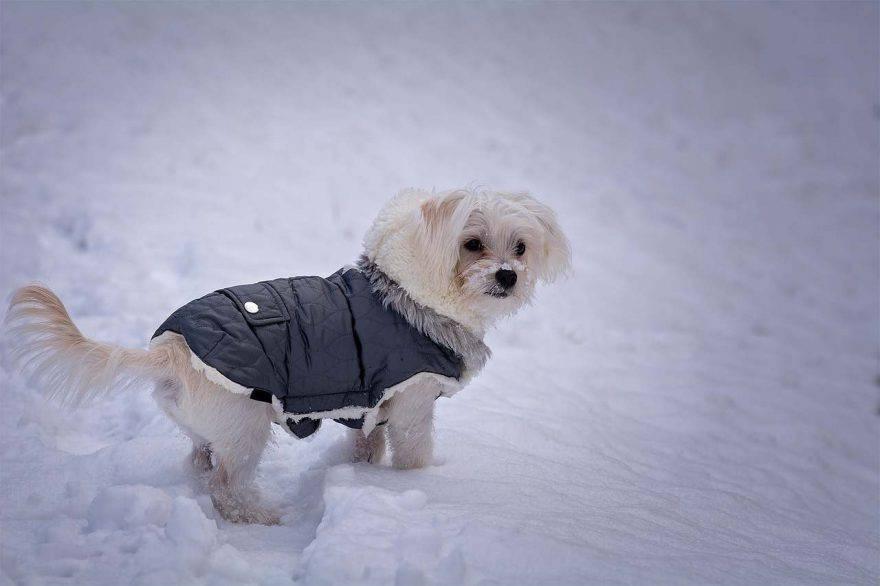 Vestire i cani