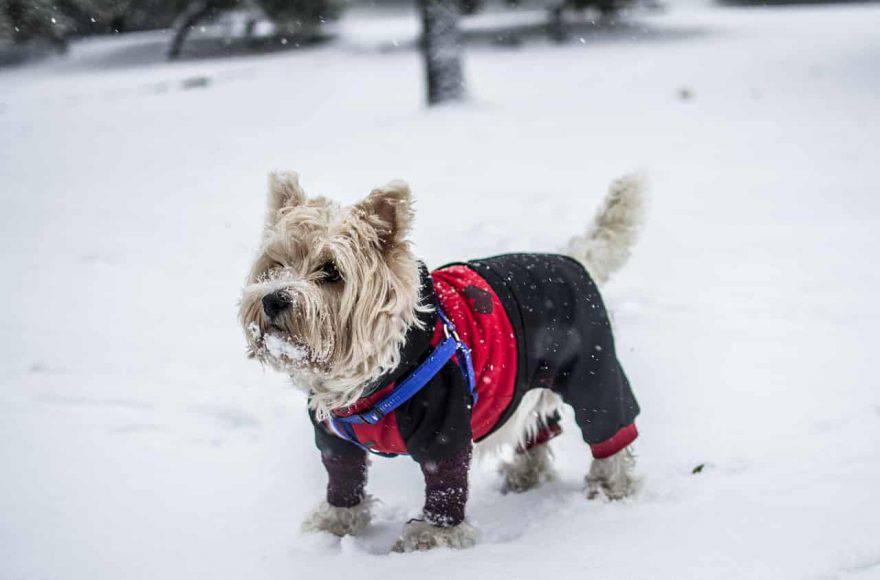 razze di cani che soffrono il freddo