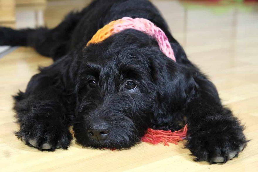 malattie stagionali cane