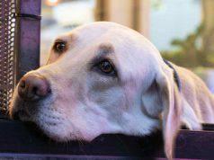 Sbalzi di temperatura cane