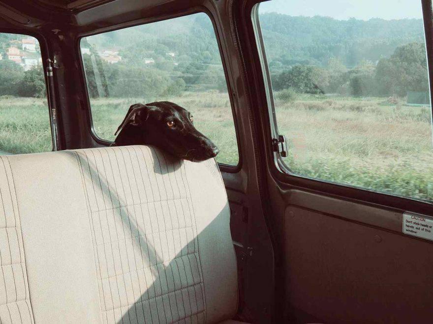 ladri cane