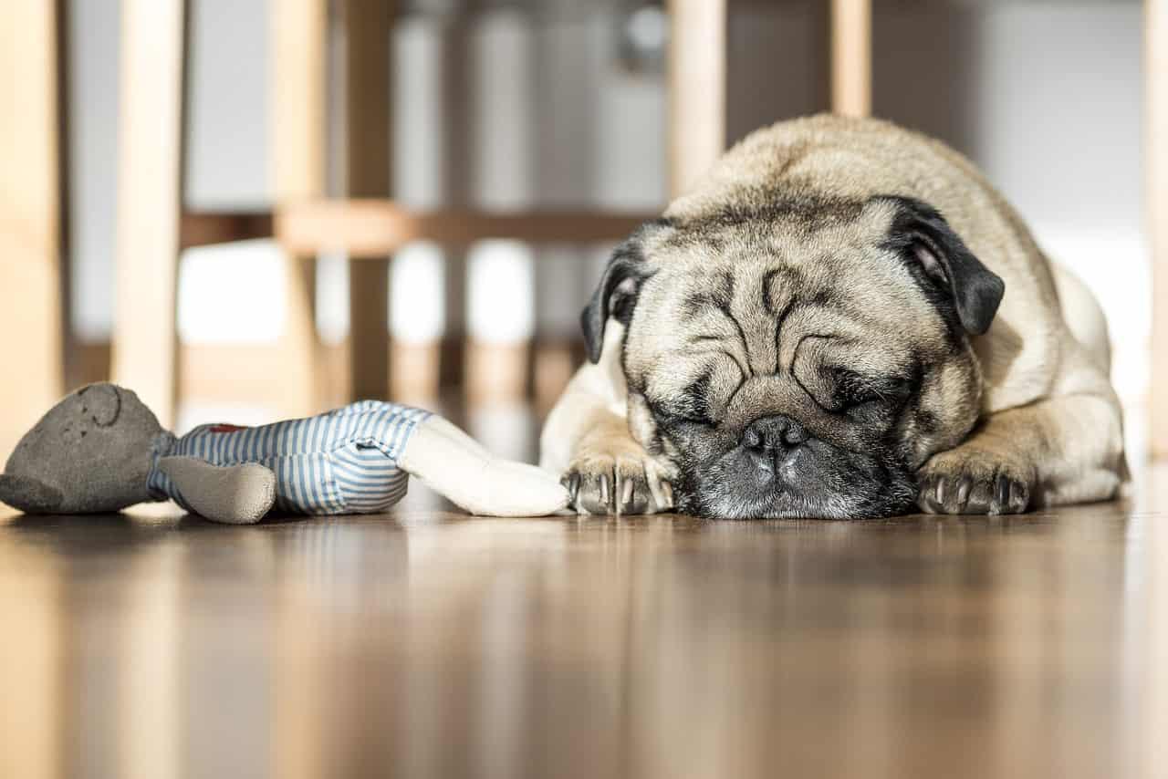aromaterapia cane