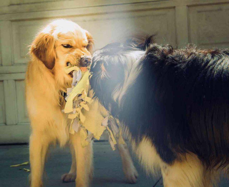 Problemi comportamentali cane