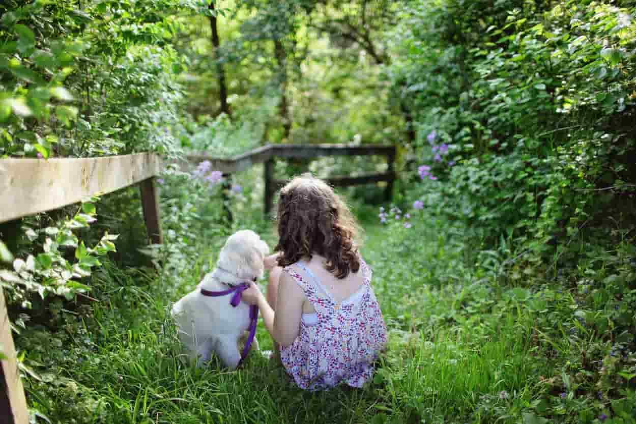 educare bimbo cane passeggiata laccio