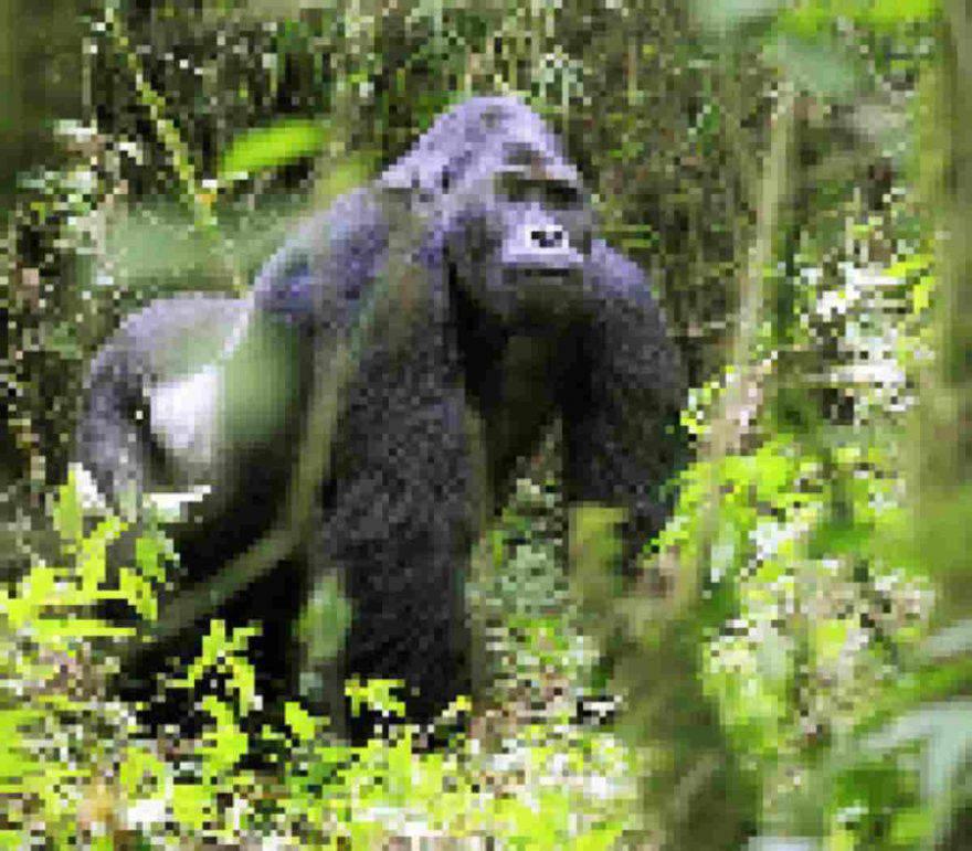 foto animali estinzione