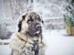 fa freddo cane