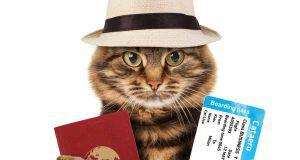 gatto aeroporto