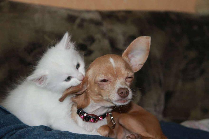 cane e cucciolo di gatto