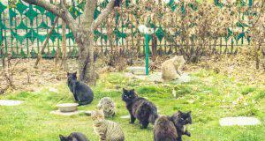 Come proteggere i gatti randagi dal freddo