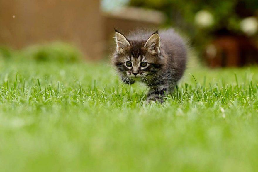gatto all'aperto