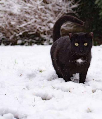 Come curare il pelo del gatto nei mesi invernali