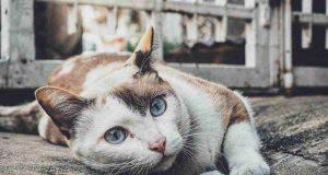 gatto raffreddato