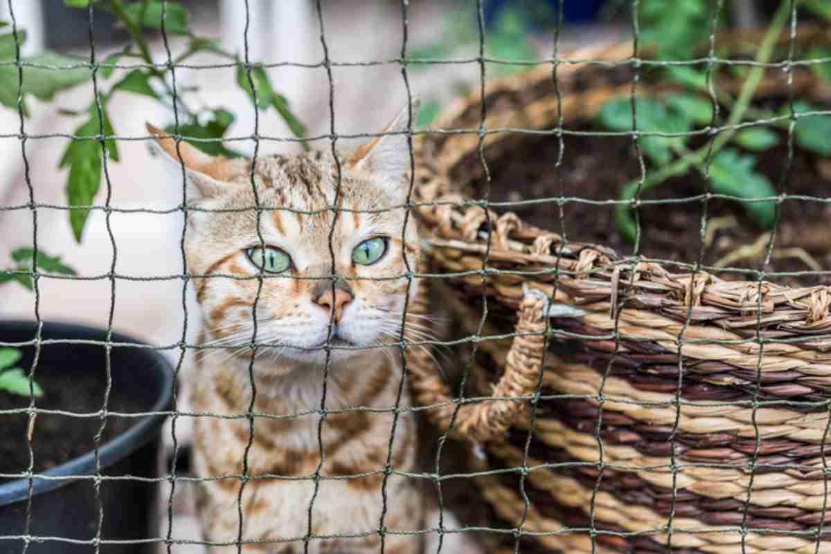 Giardino in sicurezza per il gatto