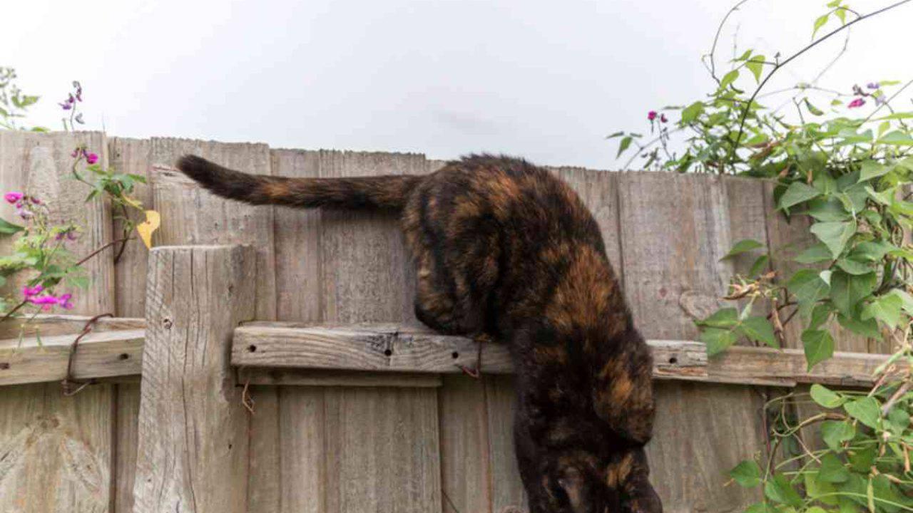 Come Recintare Un Giardino giardino in sicurezza per il gatto: ecco cosa fare per non