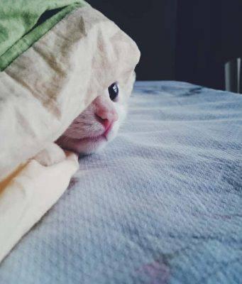 il gatto ha freddo