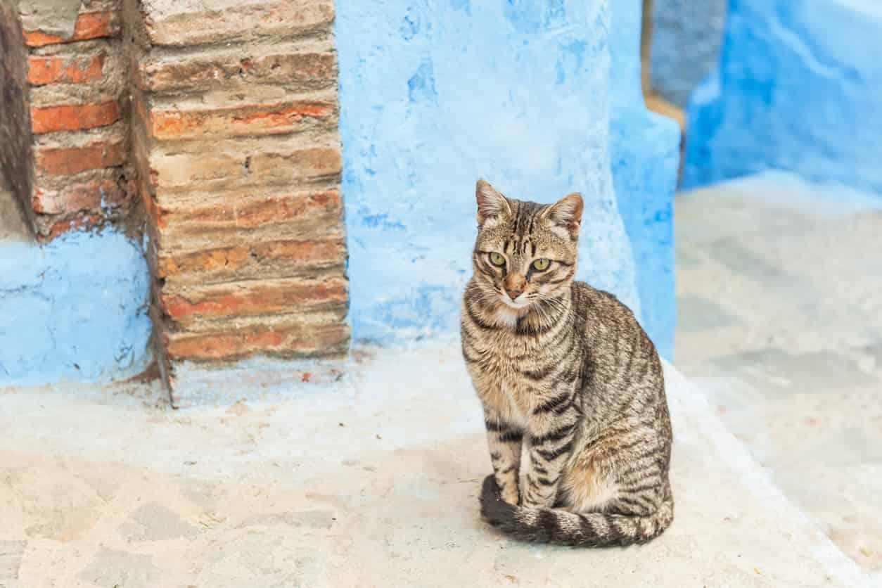 età gatto