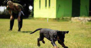 giochi educativi cucciolo cane