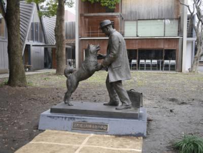 statua Hachiko vera storia