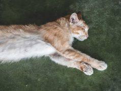 morte improvvisa gatto