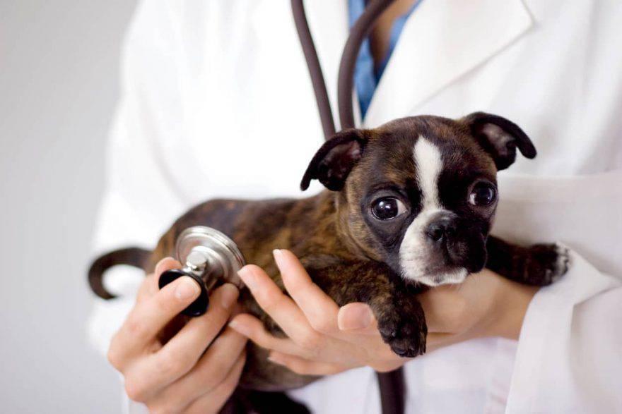 visita veterinario cane