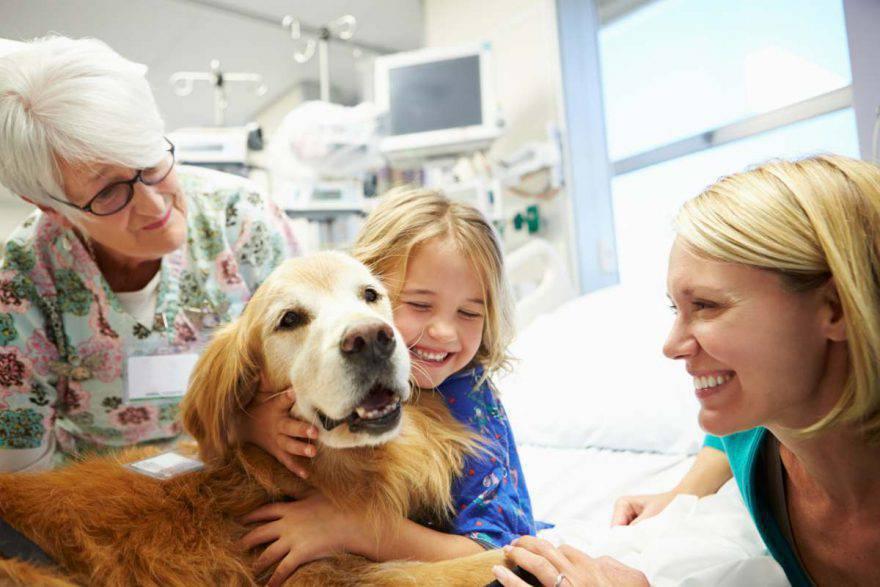 pet therapy come funziona cani eroi Italia