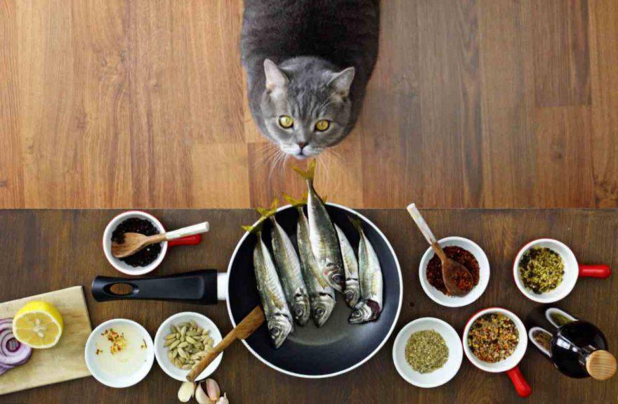 Alimenti che possiamo condividere con il gatto