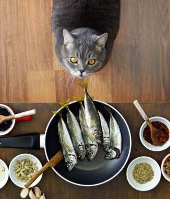 alimentazione casalinga gatto