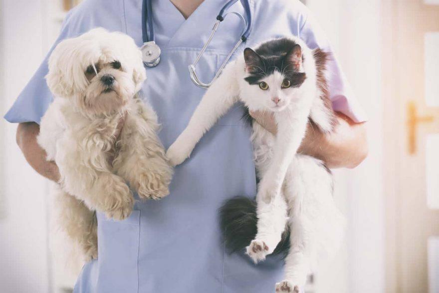 medicina preventiva animali