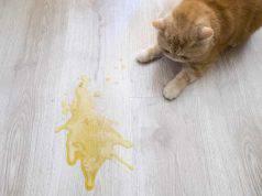 gatto fa pipì ovunque