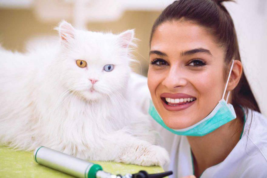 Agopuntura nei gatti