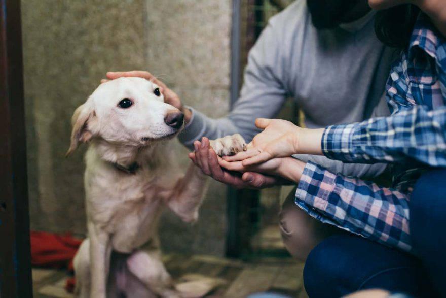 come fare per adottare un cane
