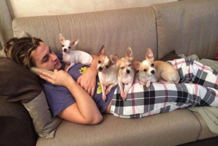 Valerio Scanu cani chihuahua Otello