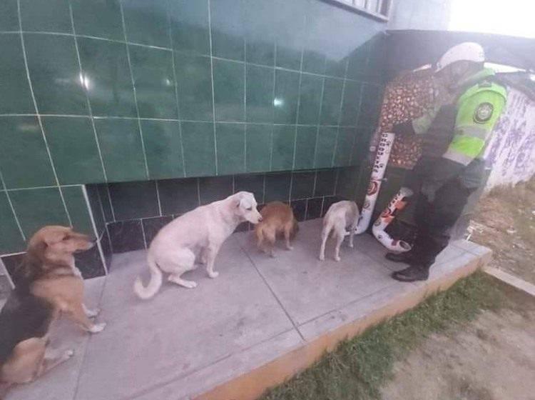 cani randagi cibo