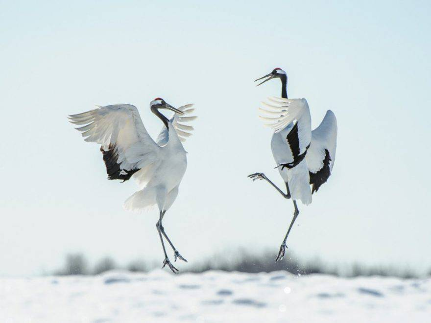 animali sanno ballare