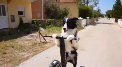 Kasia il cane piu intelligente del mondo