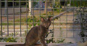Gatto magro