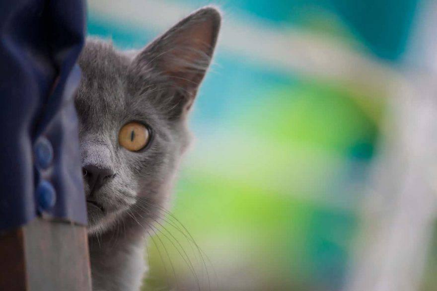 dove vanno i gatti quando escono