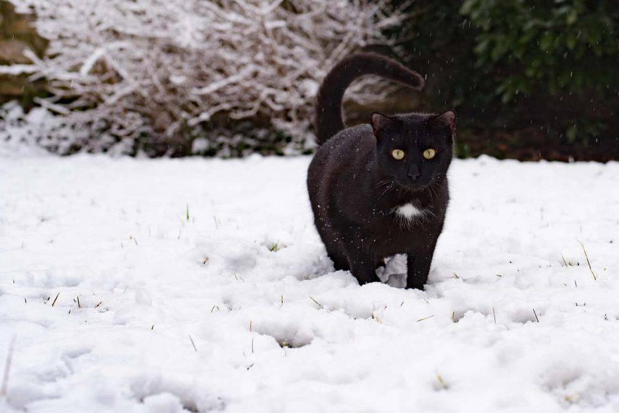 gatto nero neve