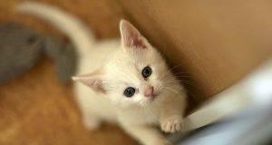 socializzazione cucciolo gatto