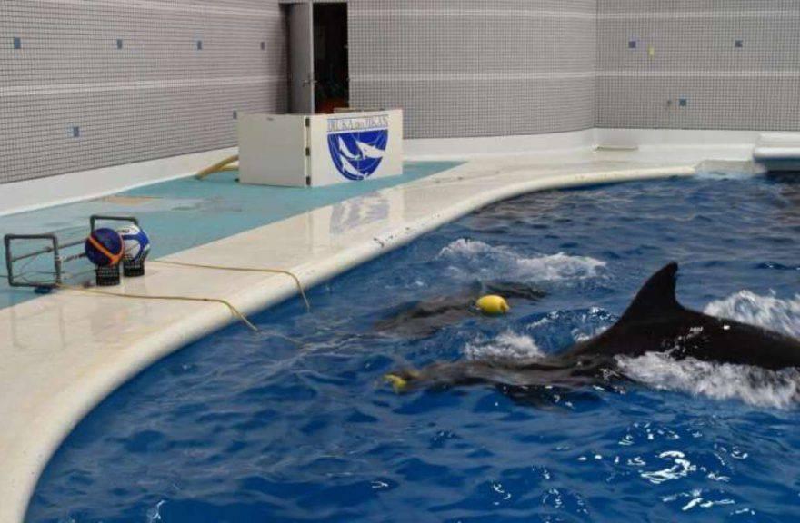 cooperazione delfini