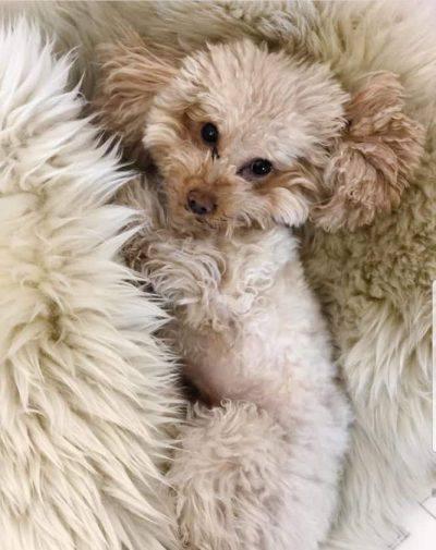Lilly il cane della Hunziker